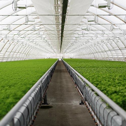 calefacción biomasa eko bt invernadero