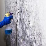 quitar el moho y la humedad